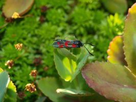 Insect Stock 2 by K1ku-Stock