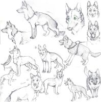 German shepherd - practice 02 by 25Nanao16