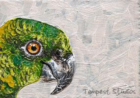 Face Off: Parrot by TempestErika