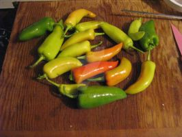 Banana Peppers 1 by torchfang