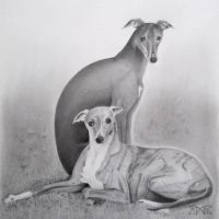 Whippet greyhound by cloudmilk