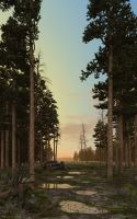 Evening in the pine forest. by slepalex