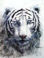 White Tiger by Hiroakzu-bw