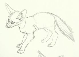 Fennec Fox sketch by Typhloser