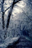 Icy Path 2 by Art-Photo