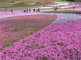 JAPAN STOCK FLOWER PLANT NO:040030393 by hirolus