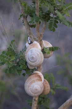 Snails on a Branch? by garrettwhitten