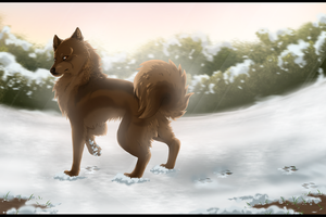 Finnish lapphund by Frodse