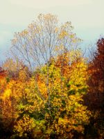 Shades of Autumn XVII by MadGardens