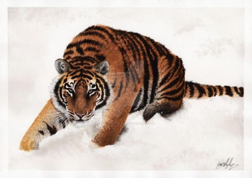 Amur Tiger Painting by The-Blackwolf