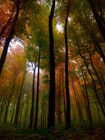 Leafy Canopy by signmeupscotty