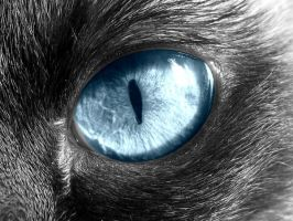 Cat Eye by charlopunk
