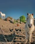 White Horses by brijome