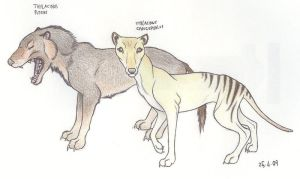 Thylacine species by Dark-Hyena