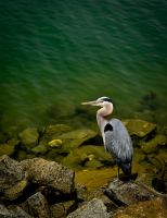 Sea Port Bird by Nathan-Ruby