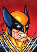 Wolverine Sketch Card by TheRigger