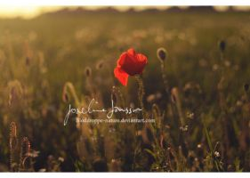 _the lonely poppy. by Bloddroppe-nature
