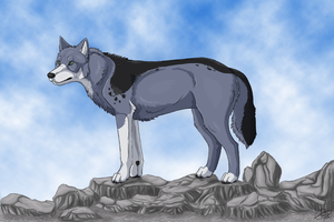 Sakari On The Rocks by olivialovesdogs