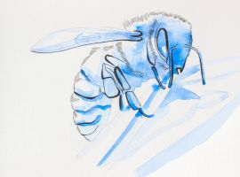 A Blue Bee by Drax242