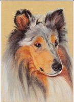 Rough Collie by Jan20000