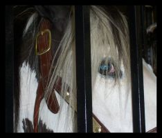Caged Perfection by GirlOnPaintHorse