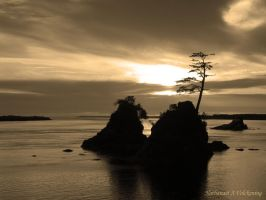 Oregon Coast by volckening