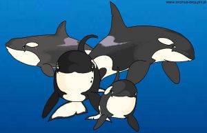 My Orca family. by Tokitae