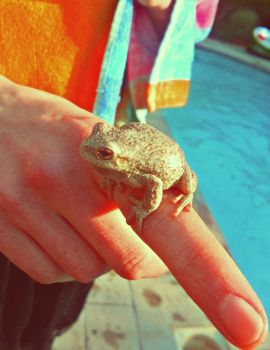 Tree Frog by october84stardust