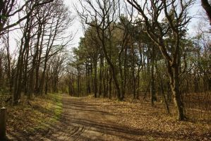 Path through the dune woods by steppelandstock