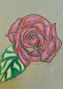 Coloring Practice on Toned Paper (rose) by doodledragon1500