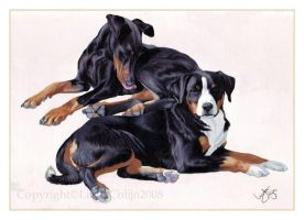 Black And Tan by LindaColijn