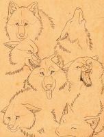 wolf emotions by Suenta-DeathGod