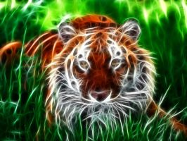 Tiger Fractal by PhantomxLord