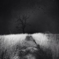 Where The Sidewalk Ends by intao