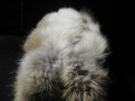 Rabbit Fur 34 by TRANS4MATICA