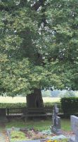 old tree at cemetery by ingeline-art