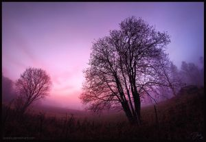 The Blueberry Fog by DaXXe