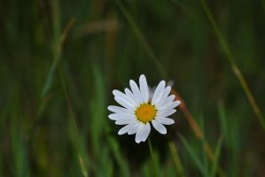 Lonely by Denisee02