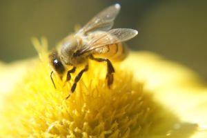 BUSY BEE by bfoflcommish