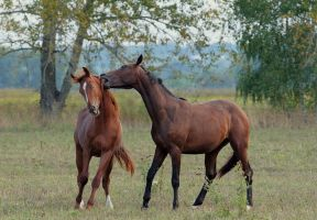 Horses game IV by Lilia73