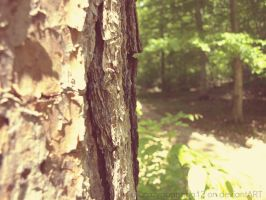 New Camera Shots- Pine by hourglass-paperboats