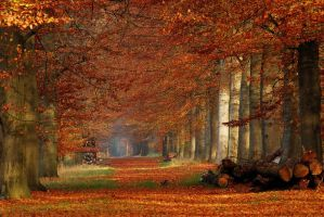 Autumn 2011 still going strong by jchanders