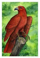 Mini Paintings - ScarletHawk by windfalcon