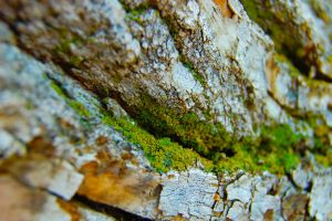 Moss Growing on a Tree's Bark by illumios