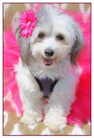 Lucy Forever Loved by TeaPhotography
