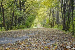 Leaf covered road 3 by LucieG-Stock