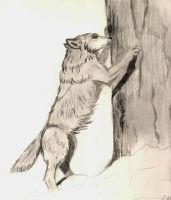 wolves can't climb trees by RattytheDevilDog