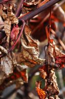 Brown dried leaves by fotografka