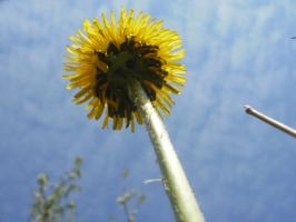 Touch the Sky Flower by Yuleto