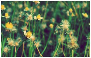 weeds by geyl